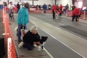 Lexi and Stormy ready on the line